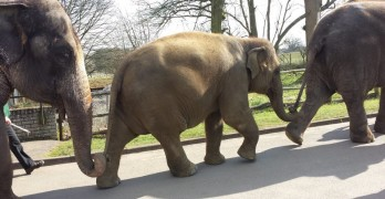 Whipsnade Zoo - elephant walk. Photo credit © L Rowe 2015