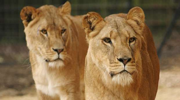 Whipsnade Zoo - Self led tour 25th May 2018