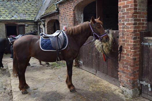 Horseriding - 7 Sept 2016