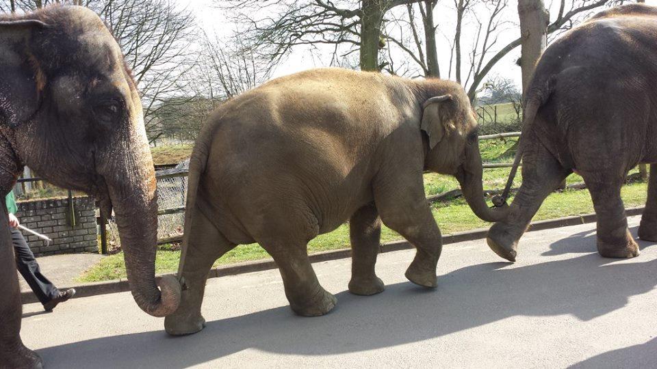 Whipsnade Zoo - elephant walk. Photo credit © L Rowe 2015